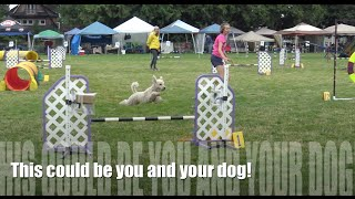 Daft Students Strut Their Stuff In Agility Competitions