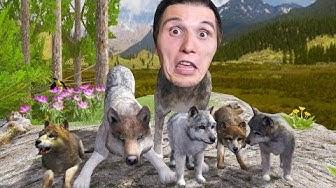 Der WOLF Simulator