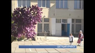 Цветущий Армянск