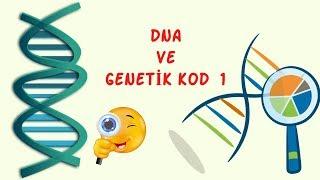 DNA Ve Genetik Kod 1 / 8.sınıf  / Fen Bilimleri