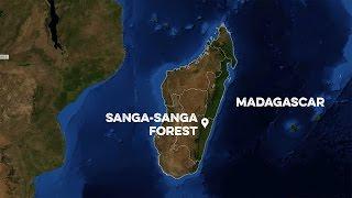 Plant Madagascar