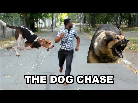 THE DOG CHASE