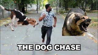 THE DOG CHASE