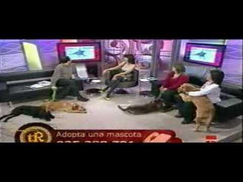 CUENCANIMAL EN CASTILLA-LA MANCHA TV 2
