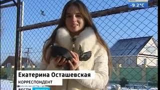 Самых красивых голубей Иркутской области показали на выставке в Иркутске
