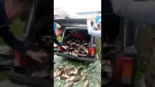 Прикол приехали с рыбалки!!!