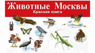 Красная книга Москвы (рассказывают Галина Морозова и Надежда Егорова)