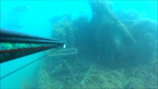 Spearfishing Northern Gulf of Mexico