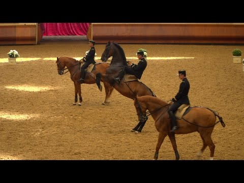 Horse-riding in the French style