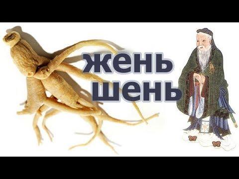 Корень женьшеня, легенда, история происхождения растения бессмертия (жизни), действие на организм.