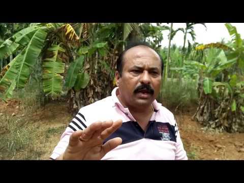 Smart Farming Technology in Coconut plantation