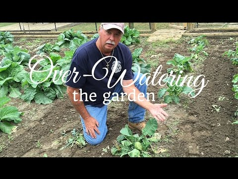 Gardening Tips - Signs Of Over Watering The Garden