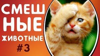 Смешные Животные 2019 Лучшие Приколы с Животными - Подборка Приколов 3 | Программы Автоматический Заработок в Интернете
