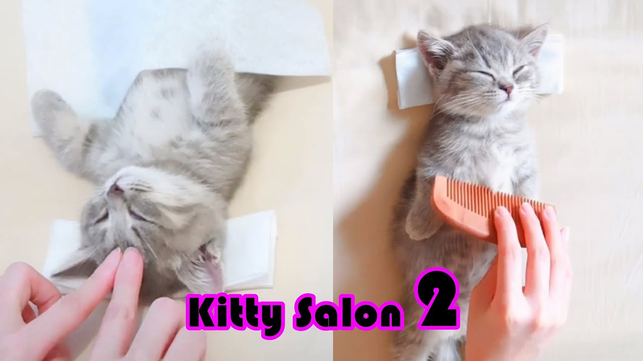 NEW! 😍Kitty Salon 2 - Super cute kitten baby cat having SPA treatment full service