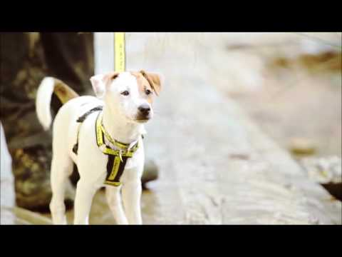 Dogs Trust at RHS Hampton Court Palace Flower Show