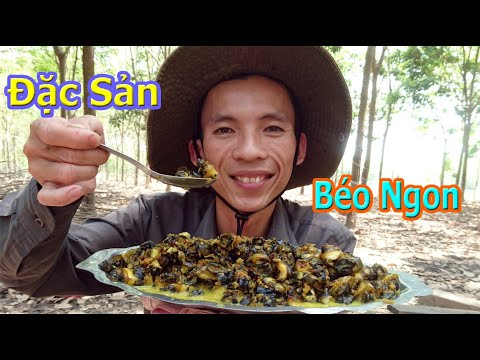 Bắt ốc Bu Và Làm Món Ốc Xào Nước Cốt Dừa / Nguyễn Văn Định Vlog
