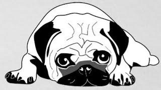 Как подобрать собаке мопс имя?