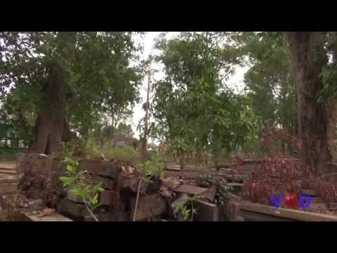 The Last Forest Of Cambodia Was Being Destroyed