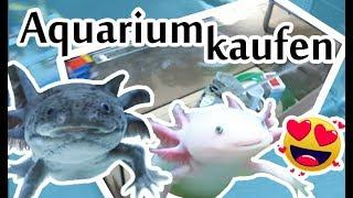 Axolotl bekommen neues Aquarium 🐟💖 Einkaufen für meine Haustiere 🐾 Vlog