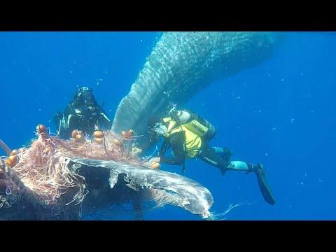 Italian coastguard frees whale trapped in fishing net
