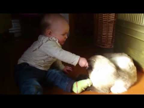 Baby and the most patient Siamese cat ever!