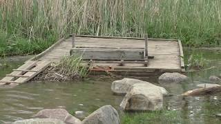 Остров на Чухломском озере