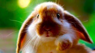 Советы для содержания кроликов дома