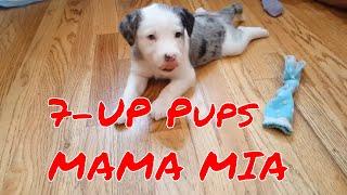 Vlog008 7 UP Pups  MAMA MIA