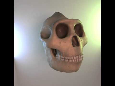 Australopithecine - sort of