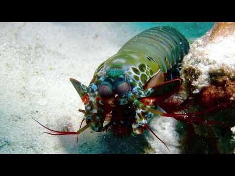 Creatures of Mnemba Island
