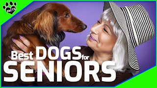 Here are the Top 7 Best Small Dog Breeds For Seniors
