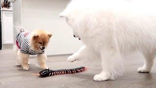 Dog Vs Giant Centipede