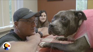 Dog Shot in the Face is SO HAPPY With Her New Life | The Dodo