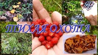 Тихая охота! По грибы по ягоды в деревню!