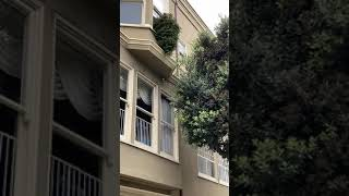 Guy Throws Christmas Tree Out of Window and it Lands Perfectly on the Ground - 1169330