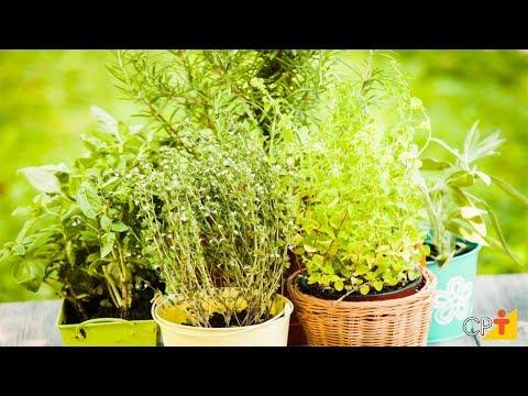Clique e veja o vídeo Curso Plantas Medicinais e Aromáticas - Produção de Mudas - Propagação Vegetativa - CPT