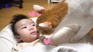 Baby and Cat & dog Funny Video (first meeting)