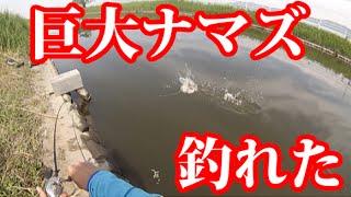 バス釣りしてたら60cmオーバーの巨大ナマズが釣れた thumbnail