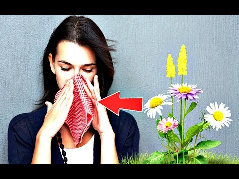На что может быть аллергия в августе? На что может начаться аллергия в конце лета?