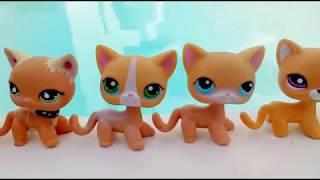 Обзор на моих стоячек LPS ( 1 ) /an overview of my shorthair cats LPS Pets 猫