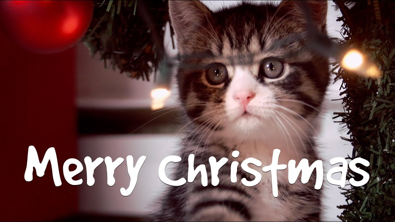 The Ultimate Cute Cats Christmas Card - YouTube