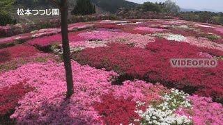 長崎県大村市の山の中にある、松本ツツジ園では美しいいろんな品種のツ...