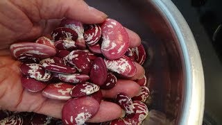 CHRISTMAS BUTTER BEANS - GROWING & COOKING STEP BY STEP [HOW TO DO IT] (OAG)