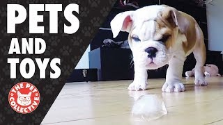 Play Time! | Pets and Their Favorite Toys