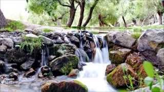Musique relaxante | Source | Nature | Chant des oiseaux | Relaxation | Torrent | Relax'Action