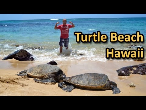 Turtle Beach in Hawaii - Laniakea North Shore Oahu