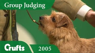 Norfolk Terrier wins the Terrier Group Judging at Crufts 2005