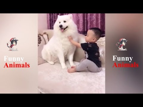 Dogs and Babies Best Friends - Dog Loves Baby