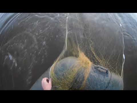 Рыбалка сплавной сетью