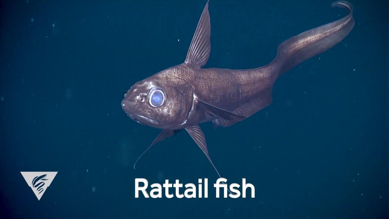 Weird Fish From The Deep 10